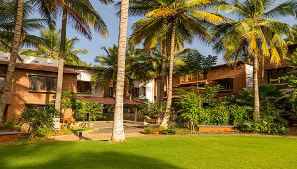 Good Earth Palmgrove