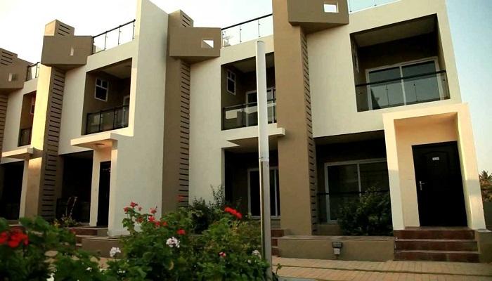 Edifice Builders Almond Tree