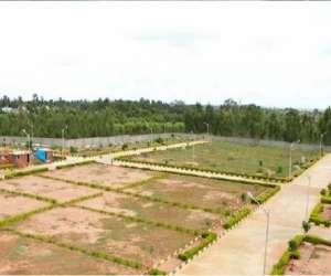 Ferns Gardenia