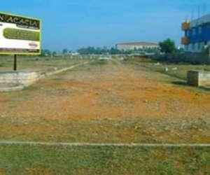 Aaryan Acacia